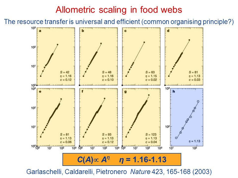 Allometric scaling in food webs