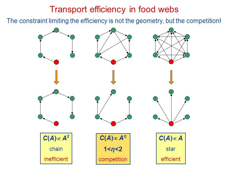 Transport efficiency in food webs