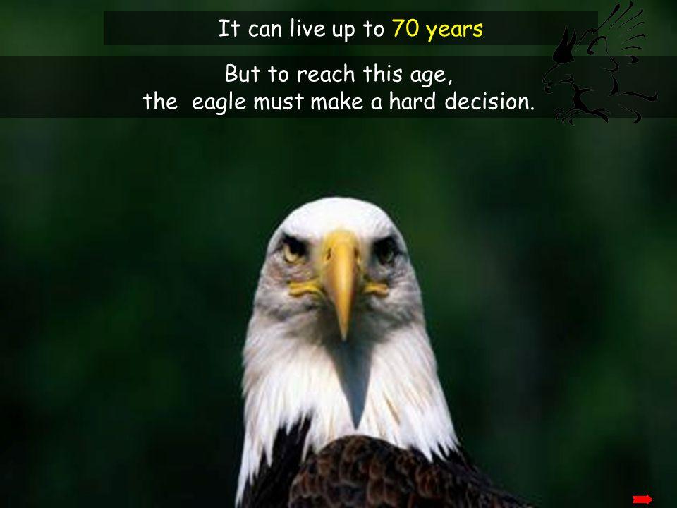 the eagle must make a hard decision.