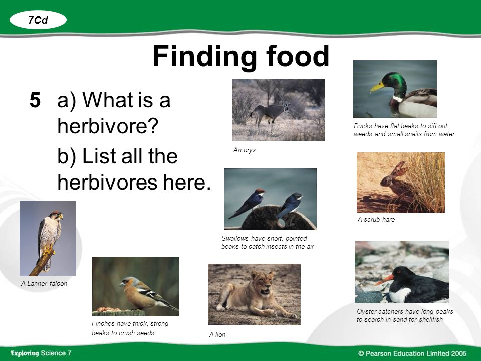 Finding food 5 a) What is a herbivore