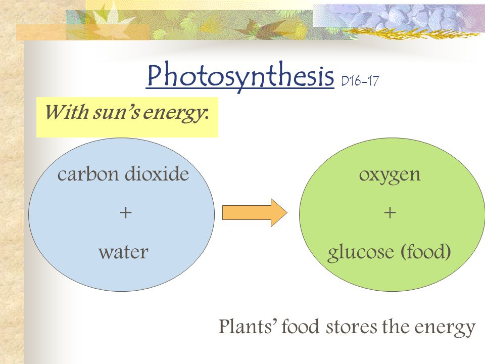 Photosynthesis D16-17 With sun's energy: carbon dioxide + water oxygen