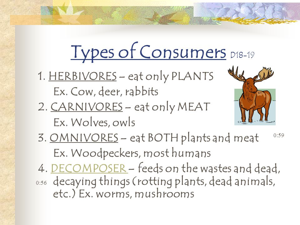 Types of Consumers D18-19 1. HERBIVORES – eat only PLANTS