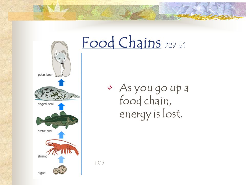 Food Chains D29-31 As you go up a food chain, energy is lost. 1:05