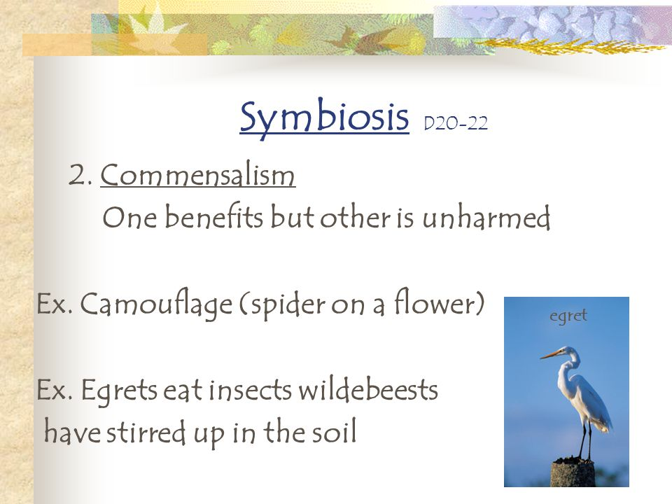 Symbiosis D20-22 2. Commensalism One benefits but other is unharmed