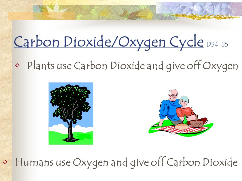 Carbon Dioxide/Oxygen Cycle D34-35
