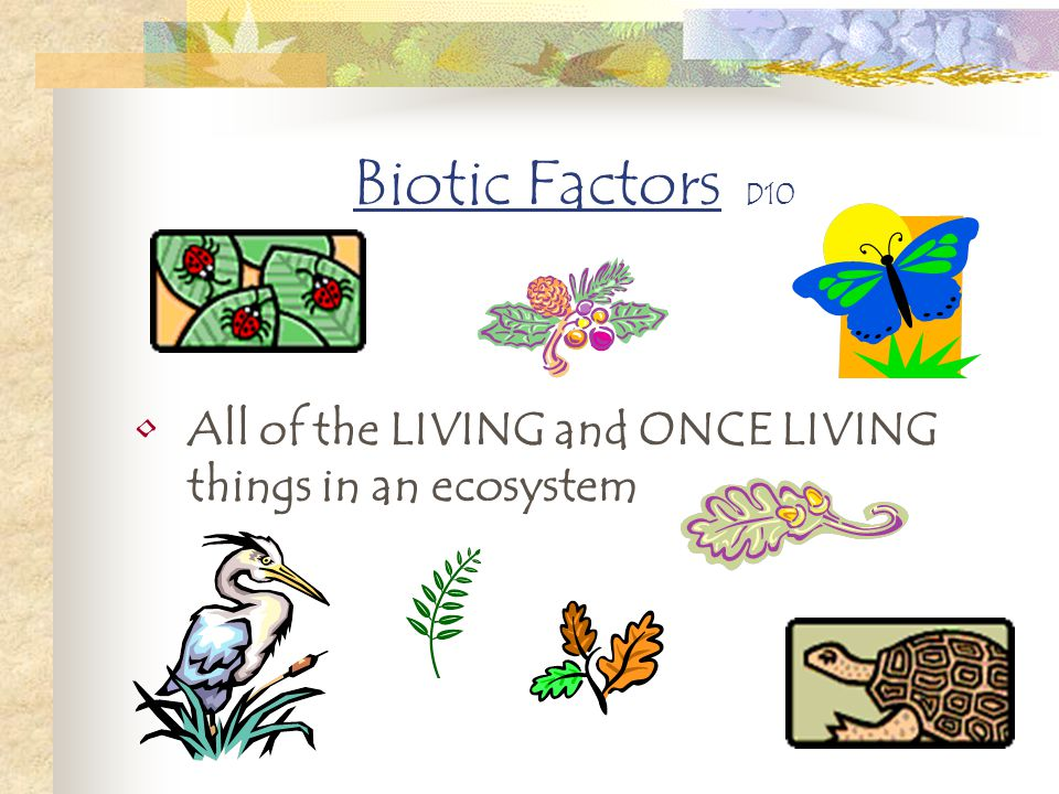 Biotic Factors D10 All of the LIVING and ONCE LIVING things in an ecosystem