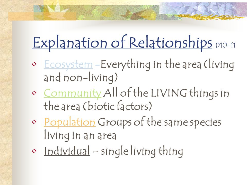 Explanation of Relationships D10-11