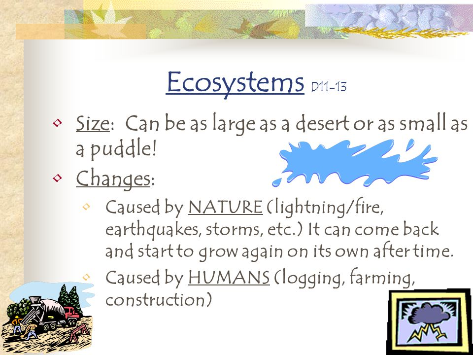 Ecosystems D11-13 Size: Can be as large as a desert or as small as a puddle! Changes: