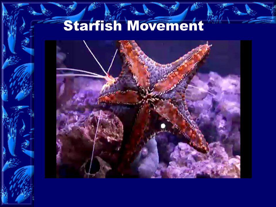 Starfish Movement