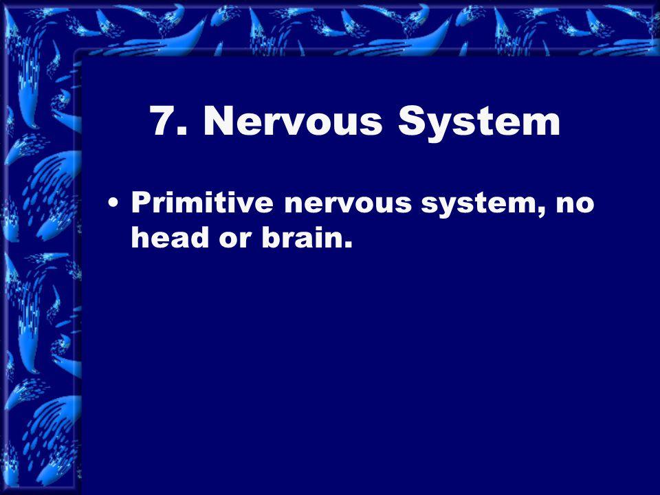 7. Nervous System Primitive nervous system, no head or brain.