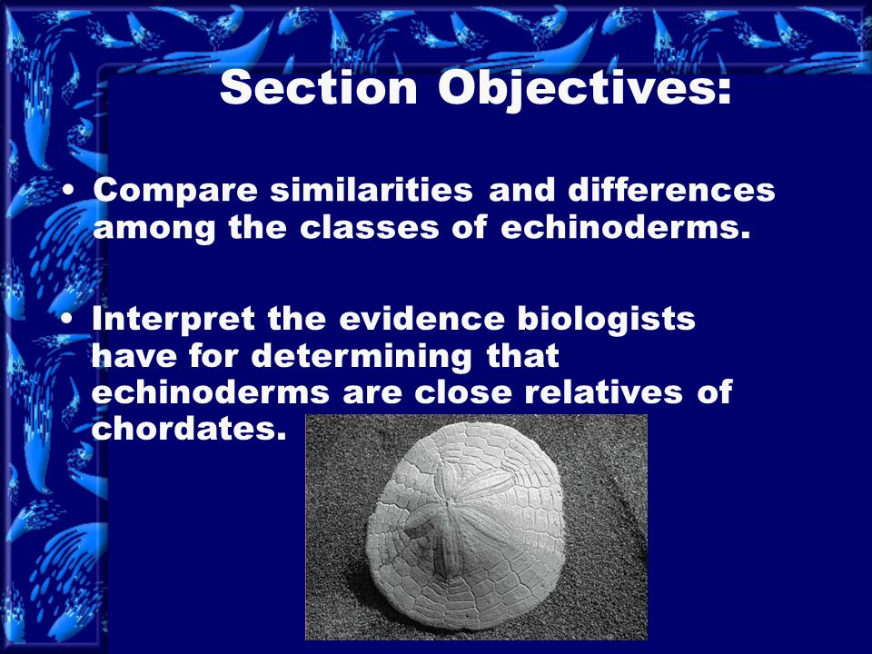 Section Objectives: Compare similarities and differences among the classes of echinoderms.