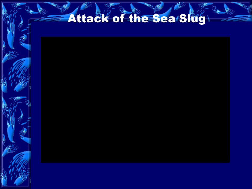 Attack of the Sea Slug