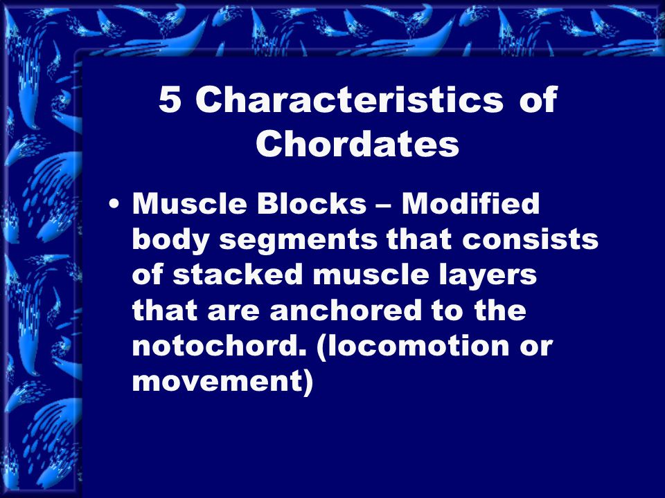 5 Characteristics of Chordates