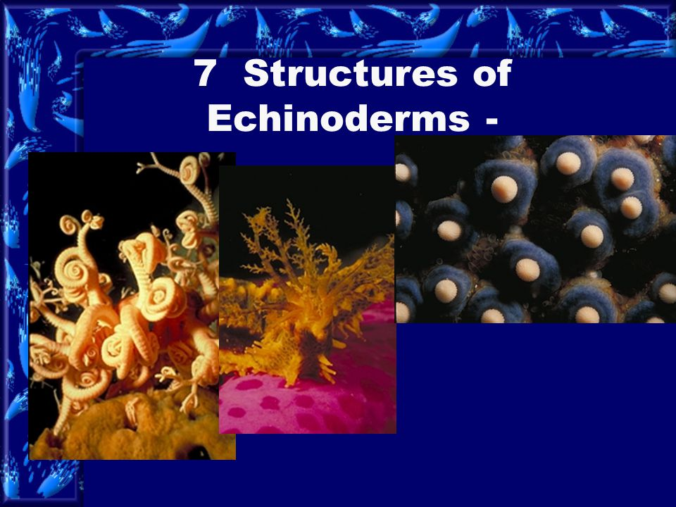 7 Structures of Echinoderms -