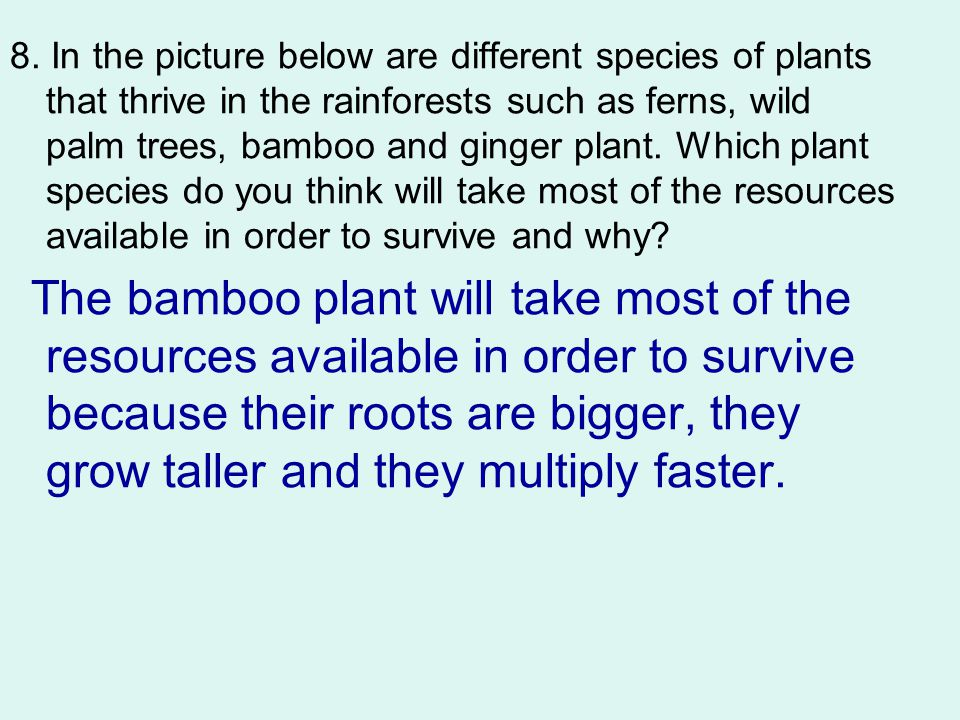 8. In the picture below are different species of plants that thrive in the rainforests such as ferns, wild palm trees, bamboo and ginger plant. Which plant species do you think will take most of the resources available in order to survive and why