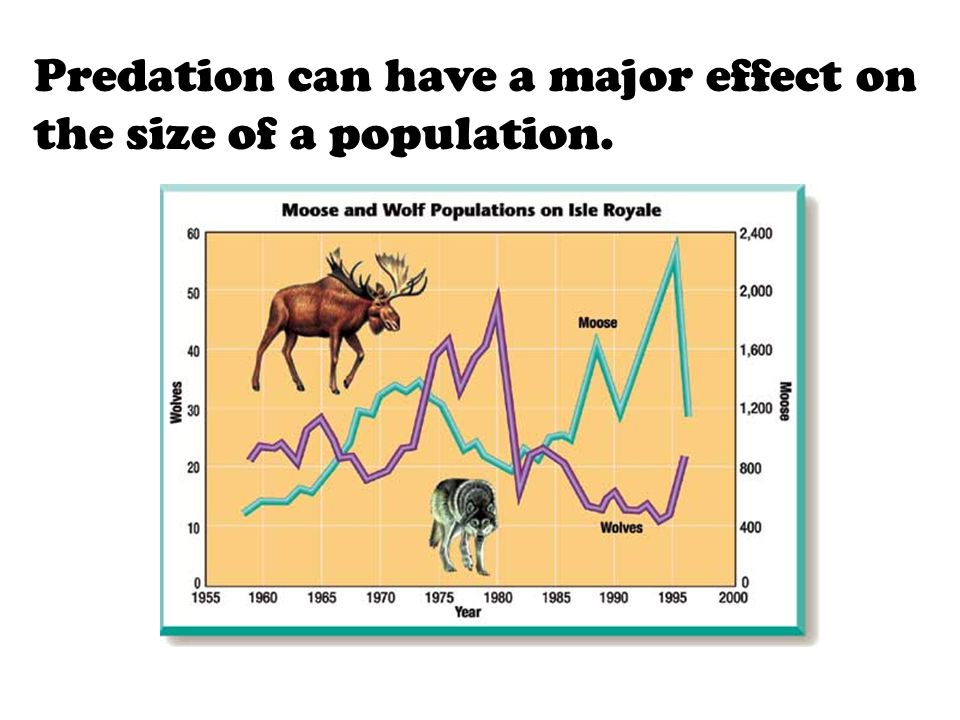 Predation can have a major effect on the size of a population.