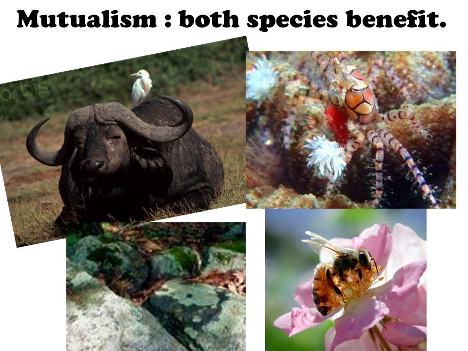Mutualism : both species benefit.