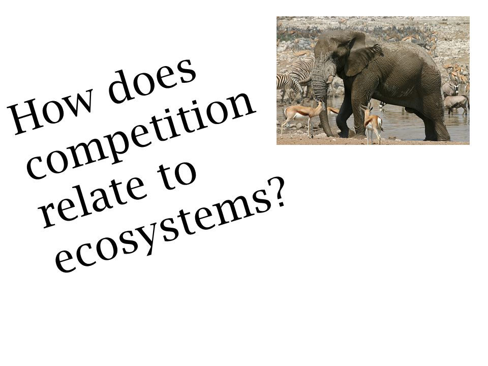 How does competition relate to ecosystems