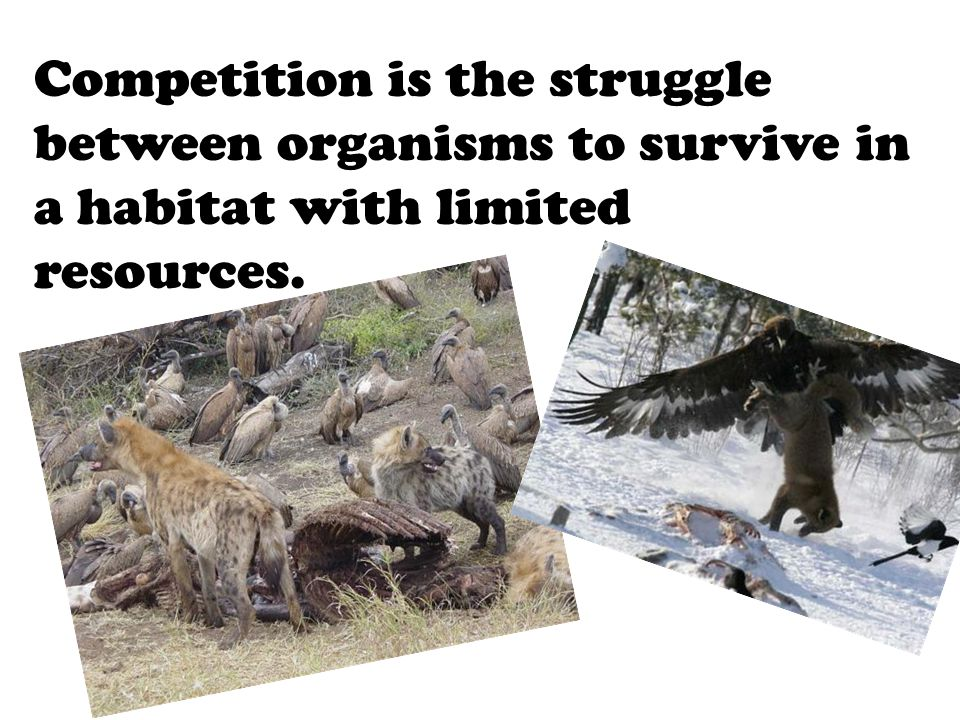 Competition is the struggle between organisms to survive in a habitat with limited resources.