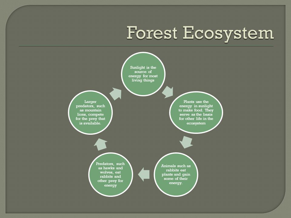 Forest Ecosystem Sunlight is the source of energy for most living things.