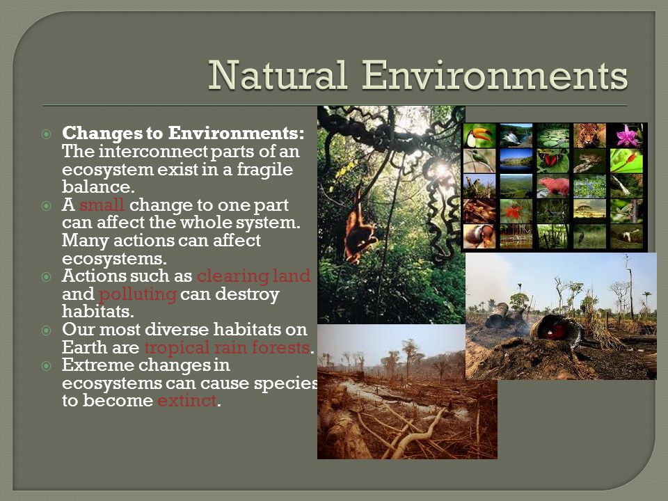 Natural Environments Changes to Environments: The interconnect parts of an ecosystem exist in a fragile balance.