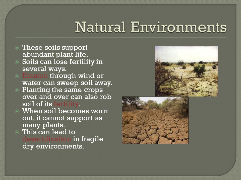 Natural Environments These soils support abundant plant life.