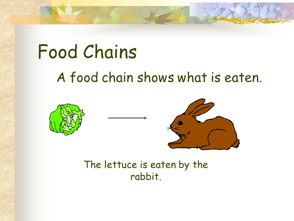 Food Chains A food chain shows what is eaten.