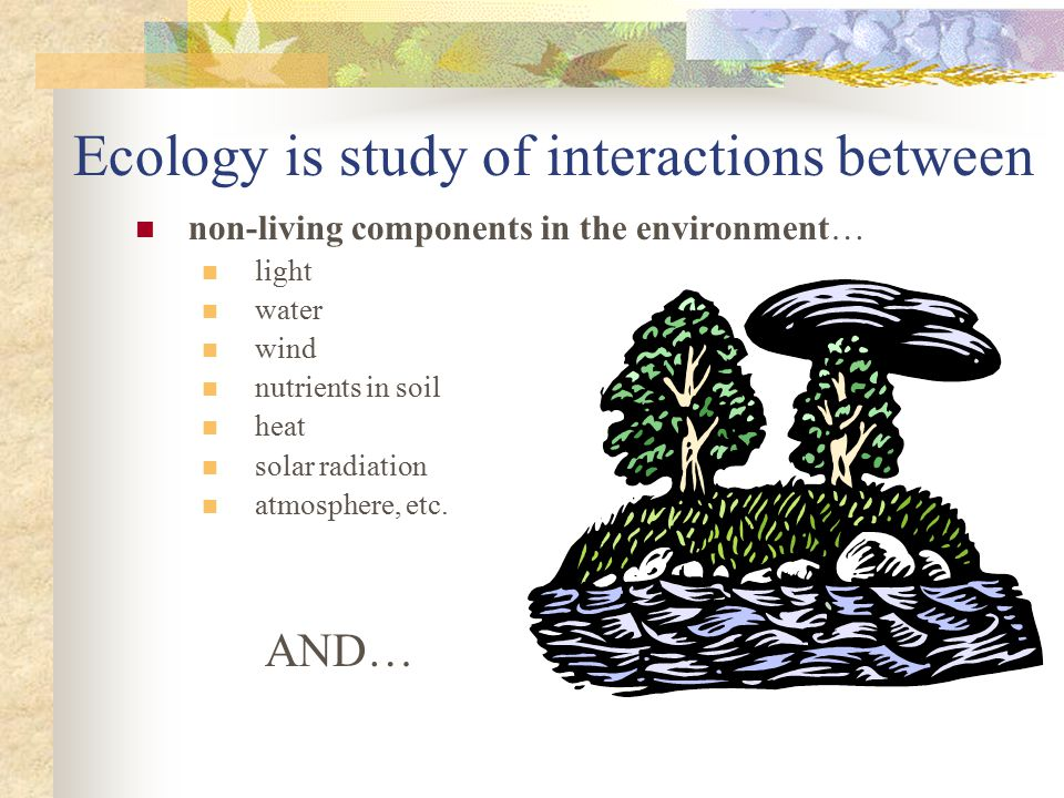 Ecology is study of interactions between