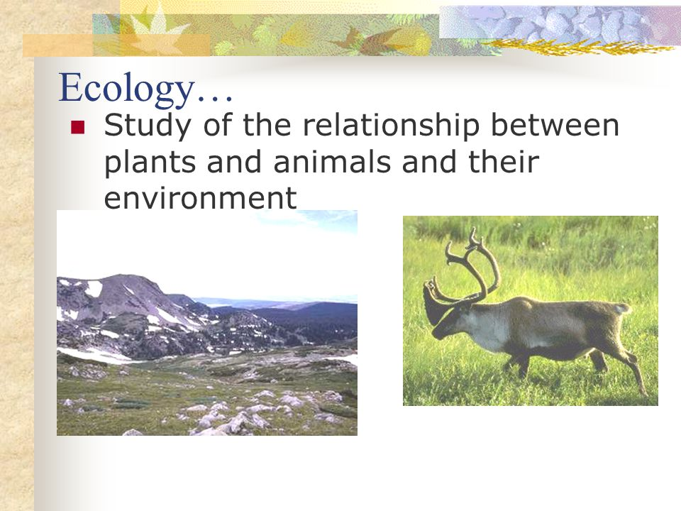 Ecology… Study of the relationship between plants and animals and their environment