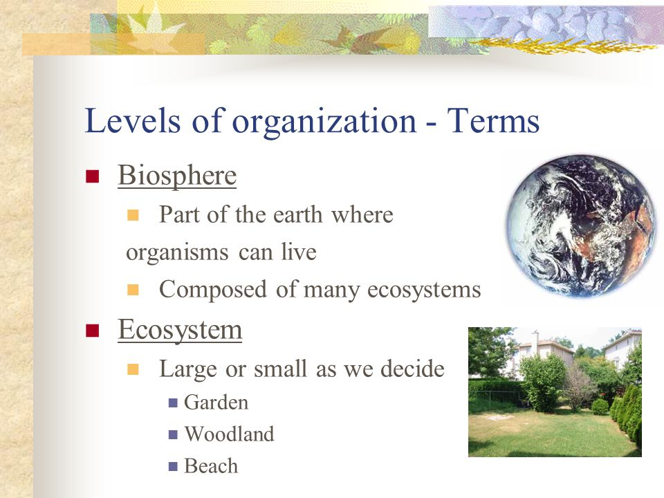 Levels of organization - Terms