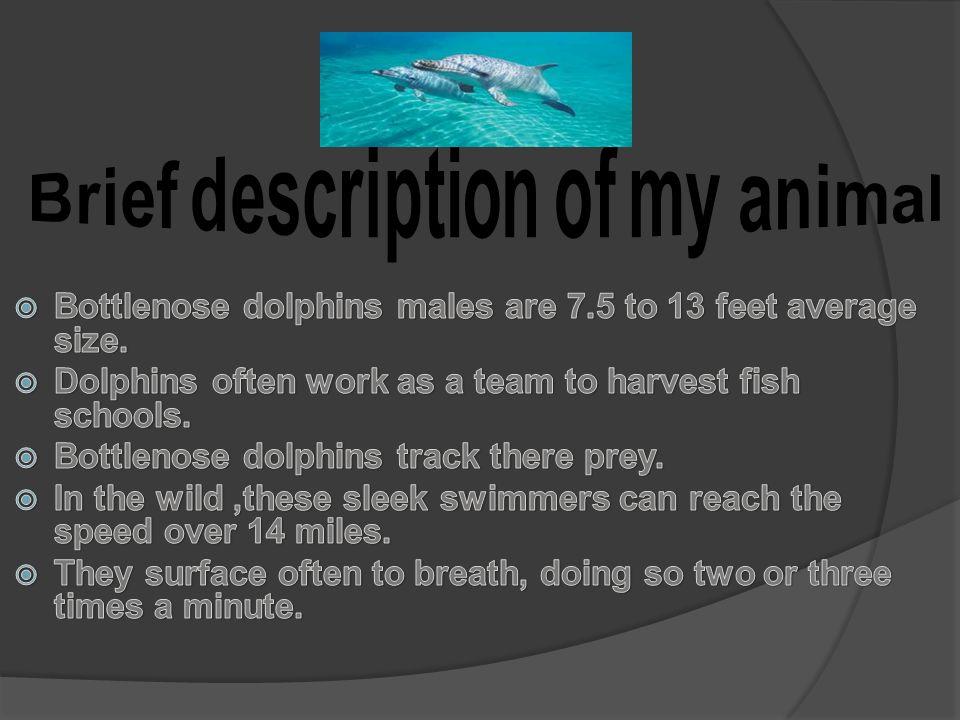 Brief description of my animal