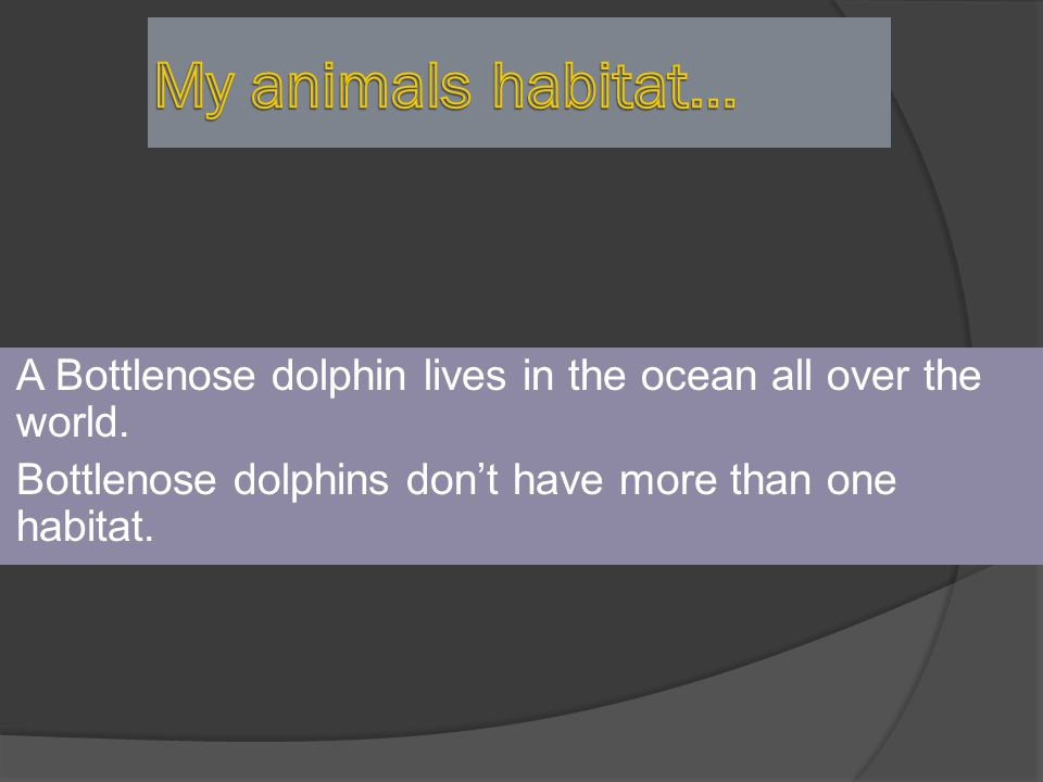My animals habitat… A Bottlenose dolphin lives in the ocean all over the world.