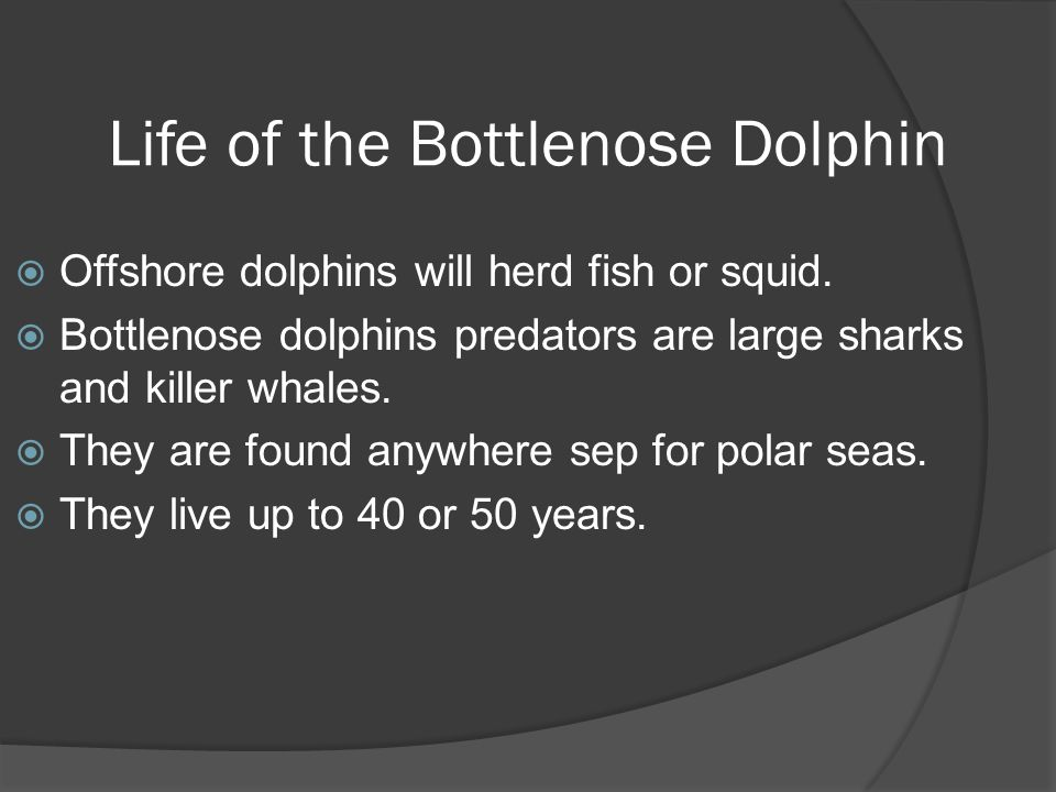Life of the Bottlenose Dolphin