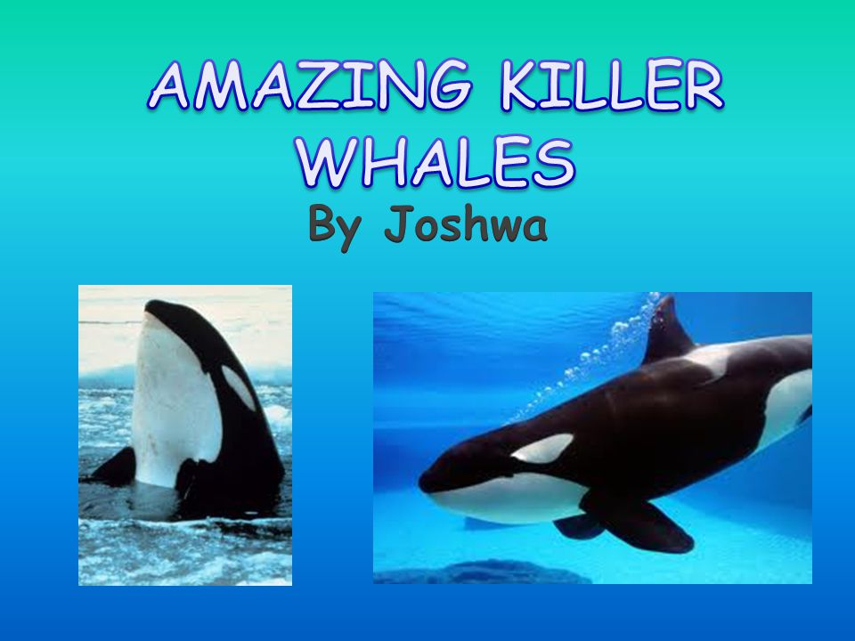 AMAZING KILLER WHALES By Joshwa