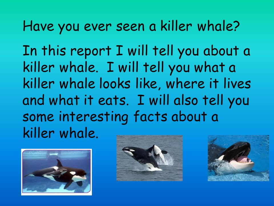 Have you ever seen a killer whale