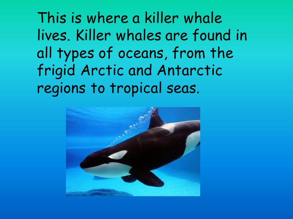 This is where a killer whale lives