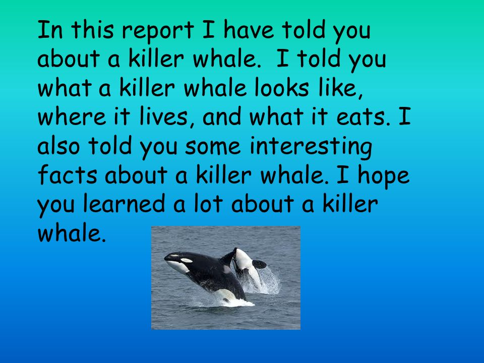 In this report I have told you about a killer whale