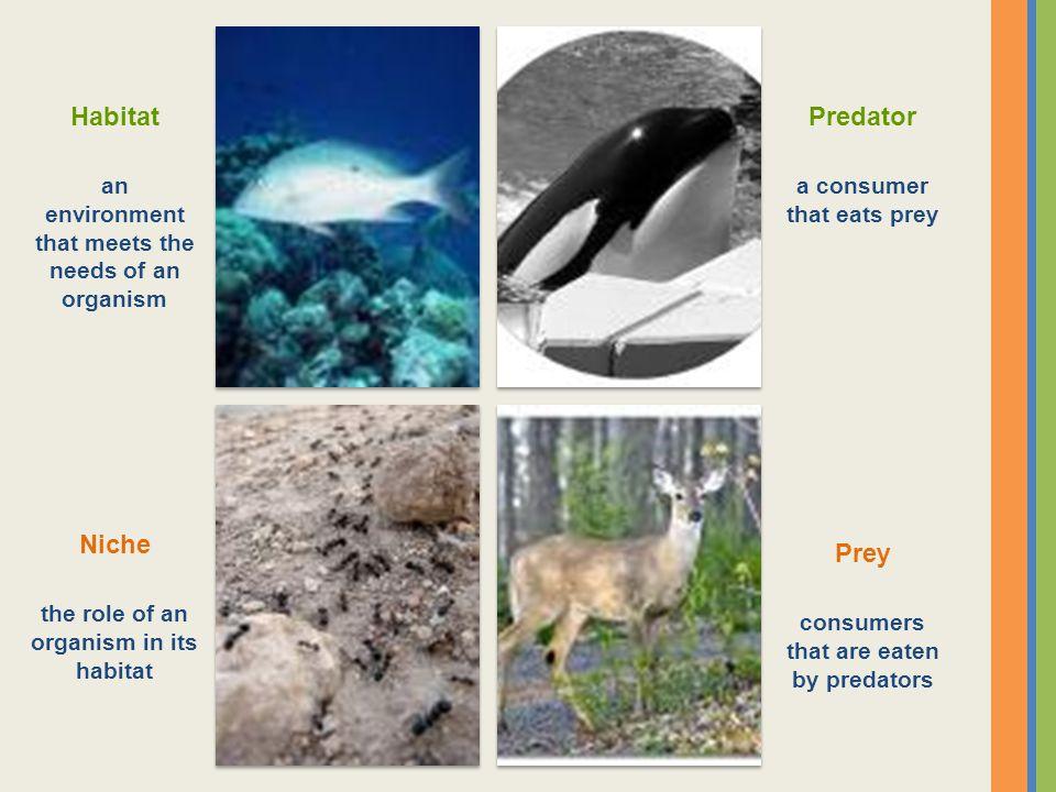 Habitat Predator Niche Prey