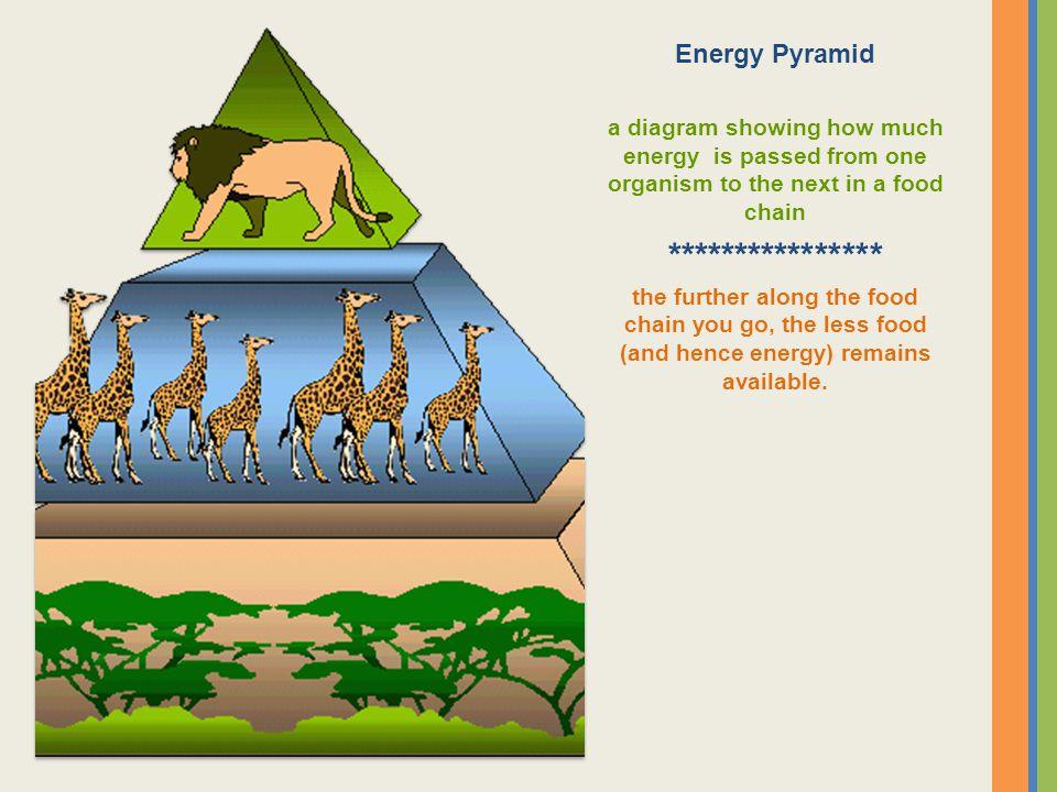 **************** Energy Pyramid