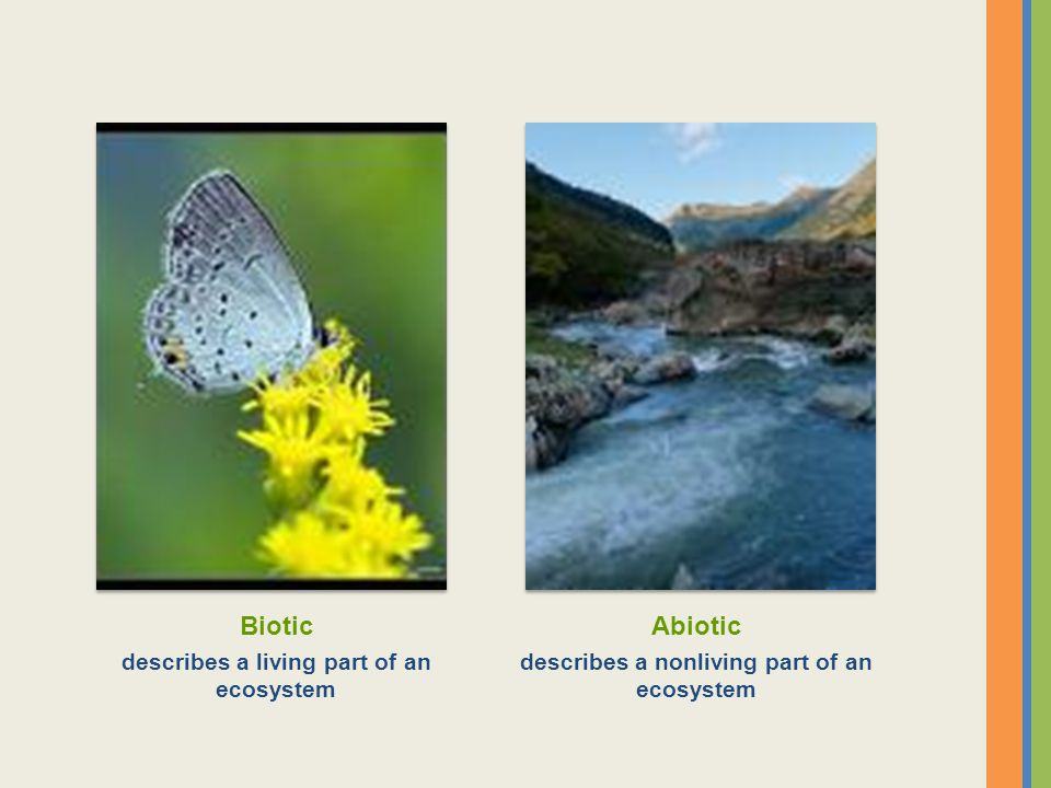 Biotic Abiotic describes a living part of an ecosystem