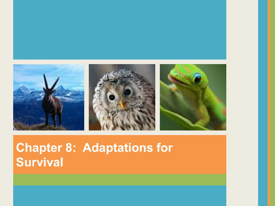 Chapter 8: Adaptations for Survival
