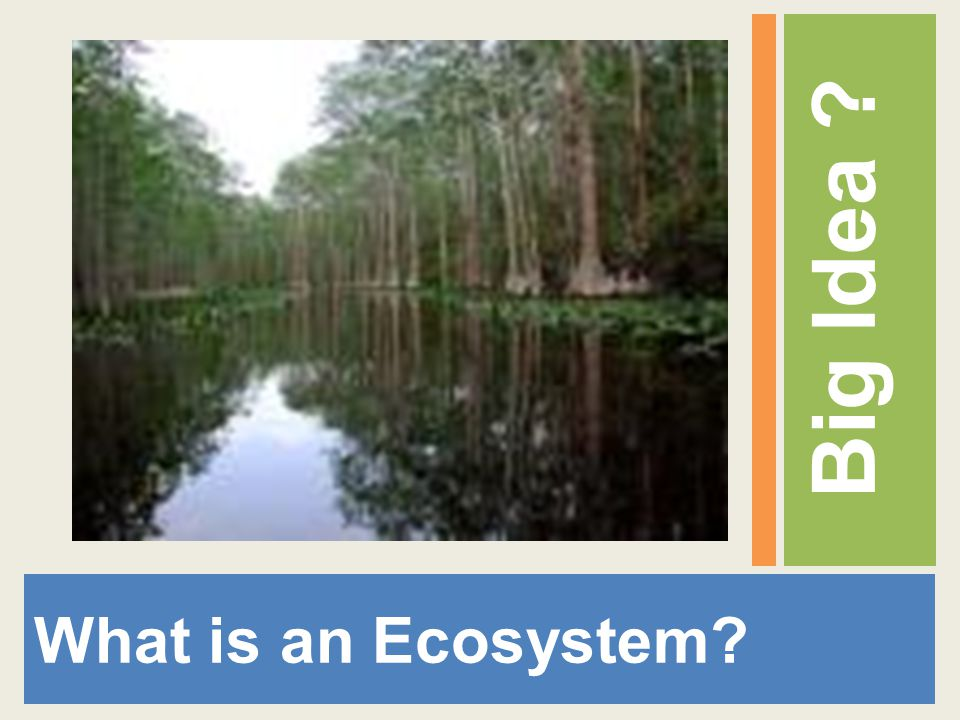 Big Idea What is an Ecosystem
