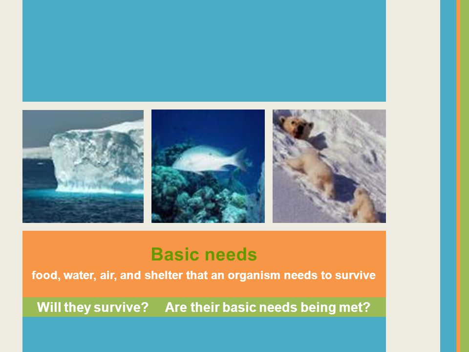 Basic needs Will they survive Are their basic needs being met