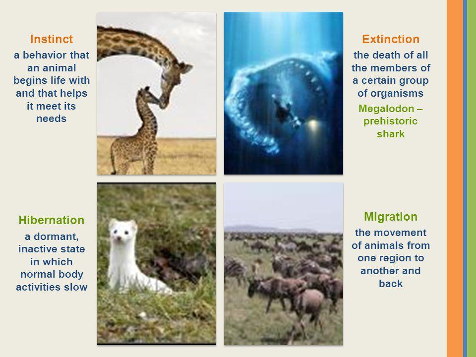 Instinct Extinction Migration Hibernation