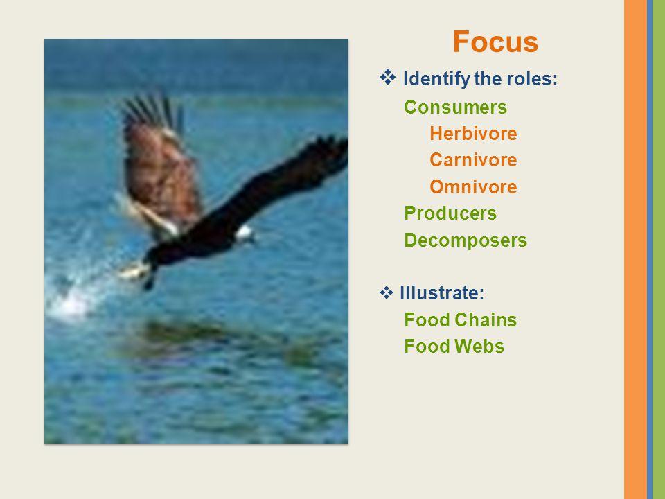 Focus Identify the roles: Consumers Herbivore Carnivore Omnivore