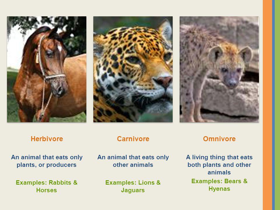 Herbivore Carnivore Omnivore