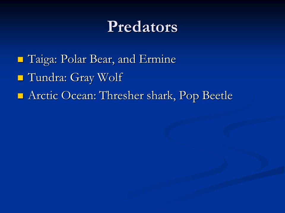 Predators Taiga: Polar Bear, and Ermine Tundra: Gray Wolf