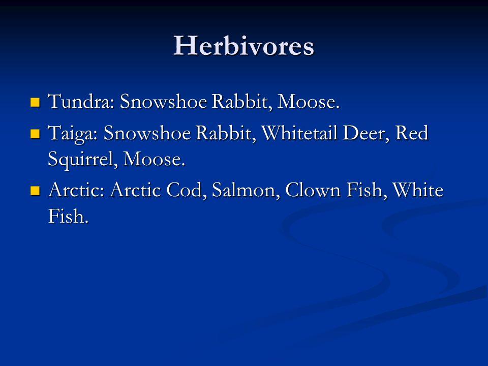 Herbivores Tundra: Snowshoe Rabbit, Moose.