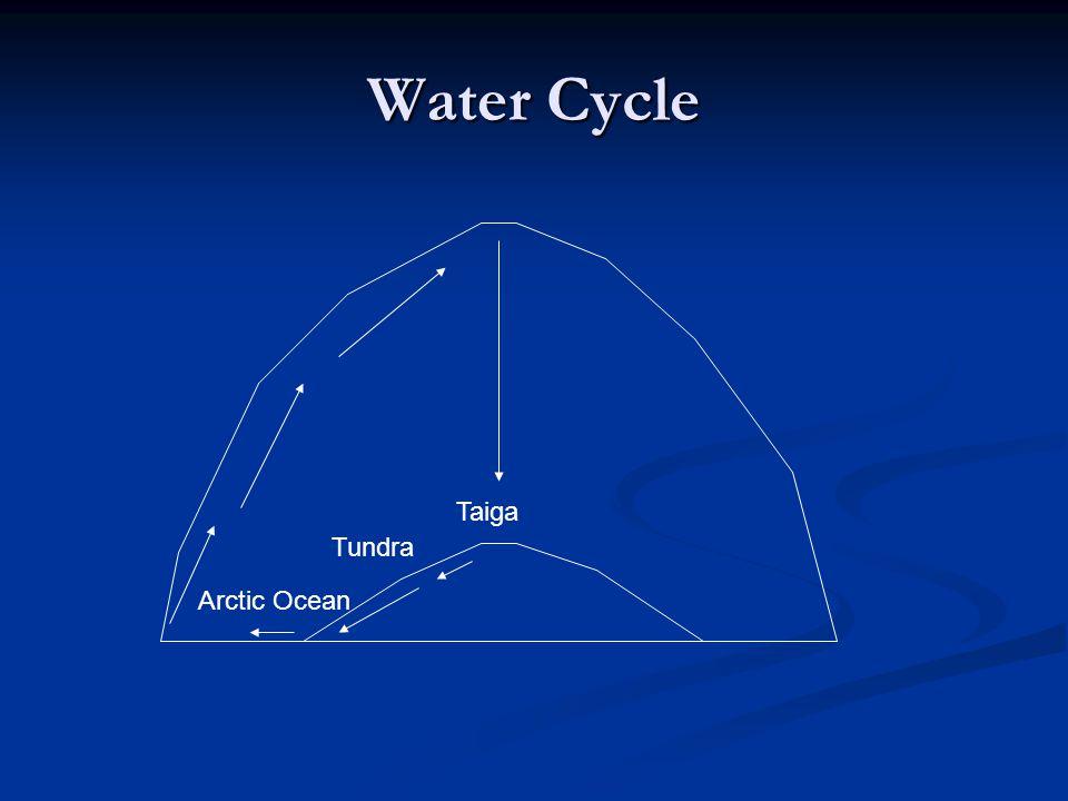 Water Cycle Taiga Tundra Arctic Ocean