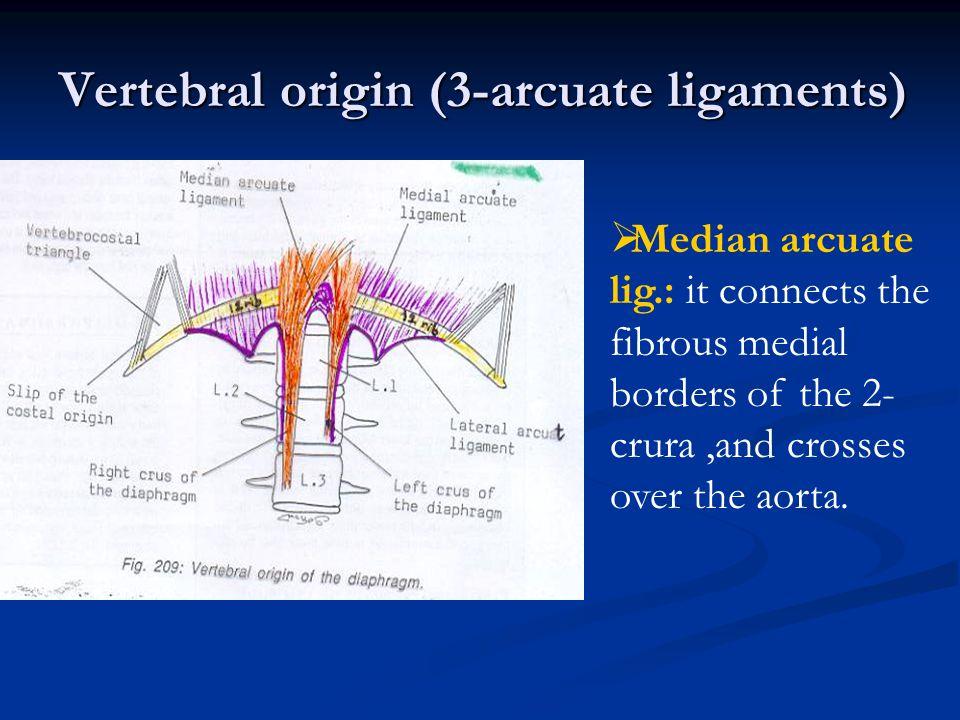 Vertebral origin (3-arcuate ligaments)